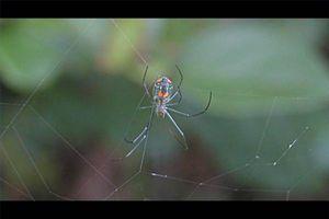 Cómo identificar las arañas en Michigan