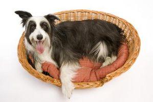 ¿Qué debo usar para llenar las camas de perro?