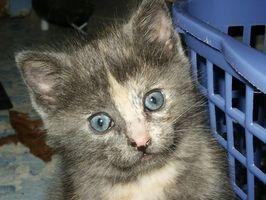 La mejor manera de introducir un nuevo gatito en una familia con un gato