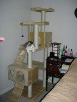 Dónde obtener planes gratuitos para un gatito Condo