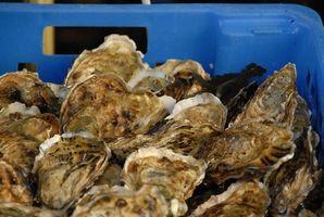 Forma de guardar las ostras en el shell
