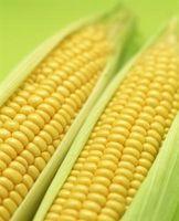 Lo que está modificado genéticamente de maíz?