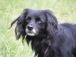 ¿Por qué huele mi perro viejo malo?