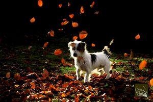 Hierbas y Especias para perros