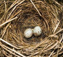 ¿Cómo se reproducen las aves?