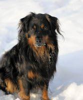 Los síntomas de congelación en un perro