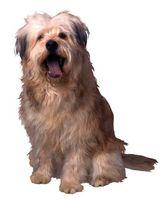 Amoxicilina efectos secundarios en los perros