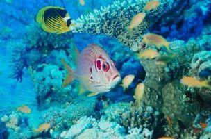 Herbívoro de Coral Fish Tank