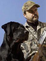 ¿Cuántos tipos de perros de caza existen?