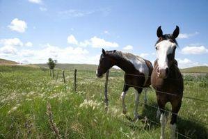 ¿Qué es un equino espalda escotada?