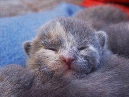Terramicina para gatitos