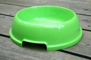 Signos y síntomas relacionados con la sed extra en los perros