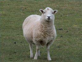 ¿Cómo se fabrica la tela de lana
