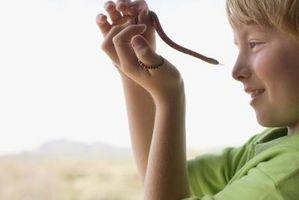 Los tipos de serpientes no venenosas pequeños