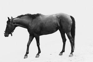 ¿Cómo alimento a los caballos de cromo para bajar de peso?