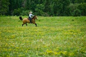 ¿Cuáles son las diferentes posturas para caminar los caballos?