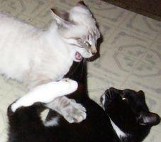 Cómo mantener el gato de De la lucha