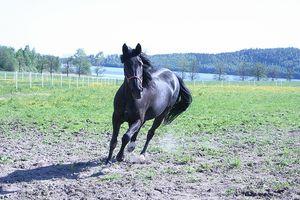 ¿Qué altura ¿Tiene un establo de caballos tiene por qué ser?