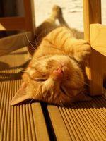 Instrucciones para construir una jaula para gatos