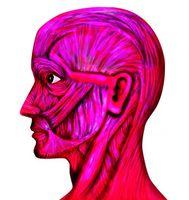 Cómo proteger el sistema muscular