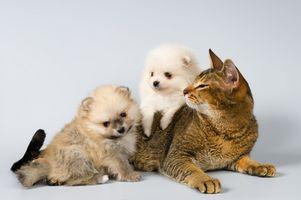Cómo lavar su gato para la caspa para alérgicos