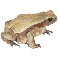 Cómo hacer un hábitat para ranas y salamandras
