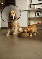 Cómo curar los puntos calientes en su perro