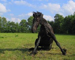 El tratamiento para las convulsiones en los Equinos