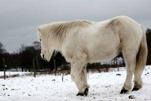 Suplementos para la enfermedad de Cushing en los caballos