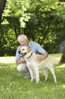 Cómo mover con un perro viejo