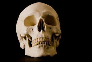 La diferencia entre los huesos de perro y huesos humanos