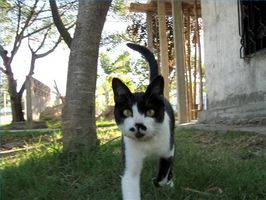 Tratamientos caseros para pulgas de los gatos