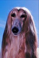 Tipos de perros de pelo largo
