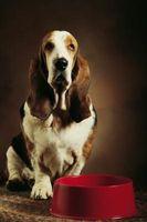 Cáncer de los ganglios linfáticos en perros de afloramiento