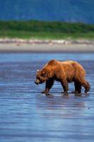 Tours Viajes de Alaska