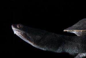 Cómo manual mediante la inserción de una tortuga de cuello largo en cautiverio