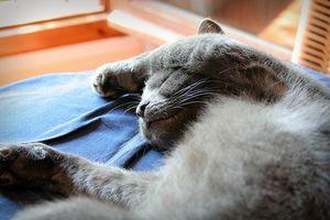 ¿Qué puedo alimentar a un gato con la piel seca?