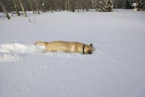 Cómo Calentar un iglú perro