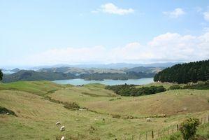 Plantas Nueva Zelanda en peligro de extinción