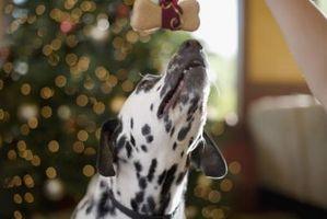 Cómo hacer sanos en casa maní y las galletas para perros mantequilla