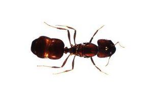 Cómo evitar que las hormigas la Alimentación y la jaula del perro