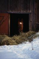 Tipos caballo Barn