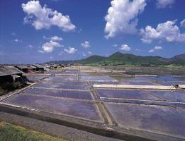 Acuaculturas filtro del grano DIY