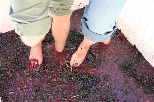 Cómo hacer vino tinto en el hogar