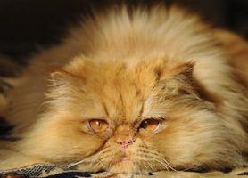 ¿Qué causa los cristales en la orina de un gato?