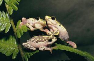 ¿Qué tipo de espacios viven las ranas en?