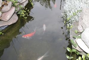 Los adhesivos que son seguros para los estanques de peces