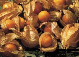 Cómo comprar de cáscara cerezas