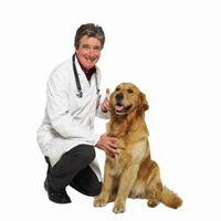 ¿Qué causa My 16 Year Old Dog a tener una tos seca constante?