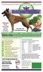 Cómo comprar el mejor alimento para perros